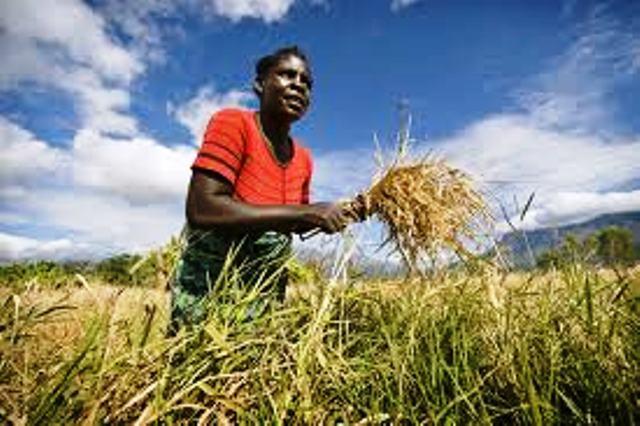 """UGB : un club """"Agro-vision"""" donne la théorie de la valorisation de l'agriculture"""