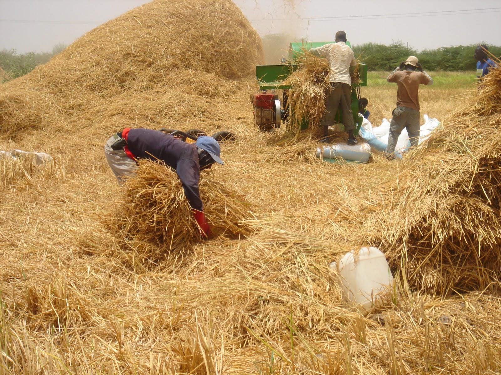 Vallée du fleuve Sénégal : Macky Sall annule plus de 11 milliards de dette des paysans