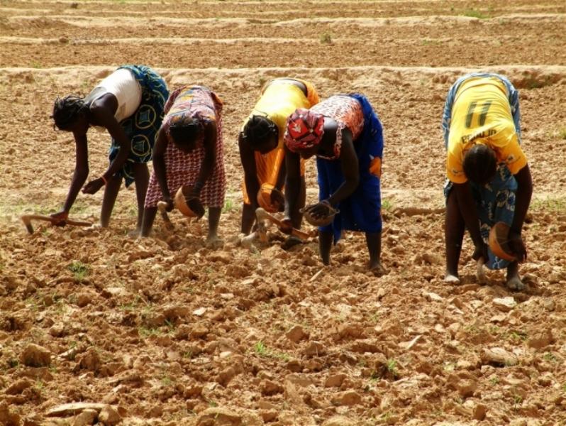 Hivernage-A l'attention des agriculteurs : conseils météo