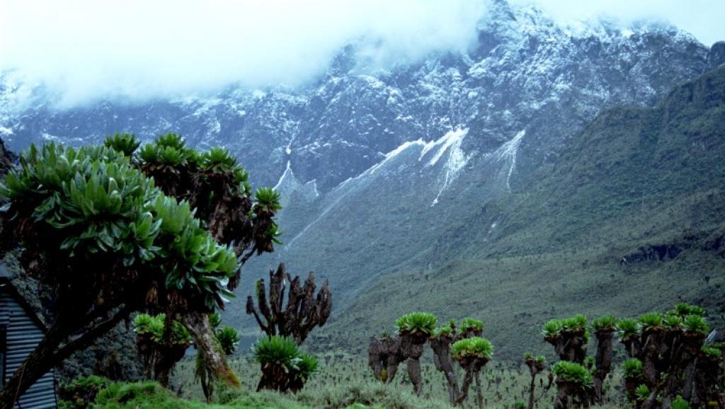 Vue sur la chaîne du Rwenzori