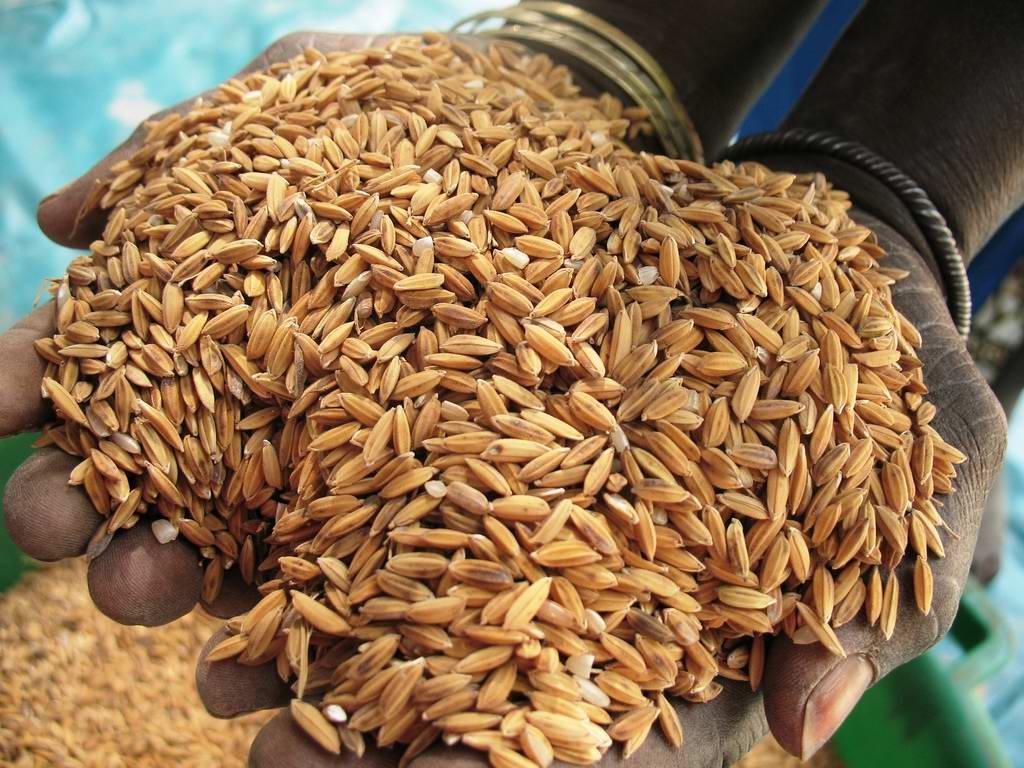Le monde rural crie sa détresse: il convoque les assises de la riziculture fluviale