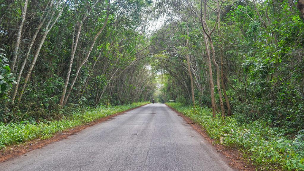 Dans une forêt de Côte d'Ivoire. Flickr