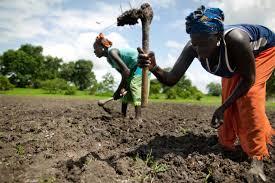 """Rapport: Oxfam liste les """"mégas partenariats public-privé dans l'agriculture africaine"""""""