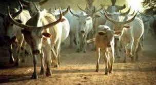 Vol de bétail à Thiès : la gendarmerie épingle deux bergers avec un troupeau entier