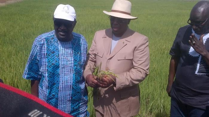 Tournée dans le Walo : Macky Sall annonce l'autosuffisance en riz pour 2017