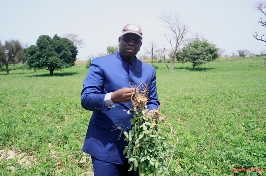 Agriculture : Le chef de l'Etat Confirme le prix fixé pour la commercialisation de l'arachide