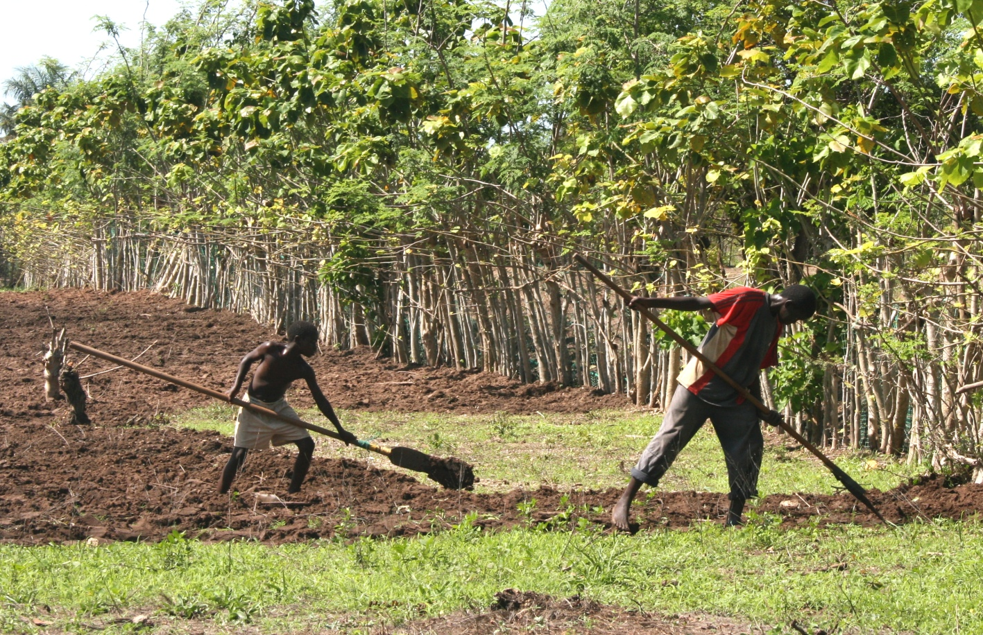Quelles réformes foncières pour le développement socio-économique du Sénégal ?