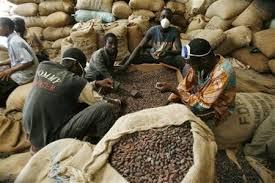 Cacao : Le taux de transformation des fèves est de 30% en Côte d'Ivoire (ministre)