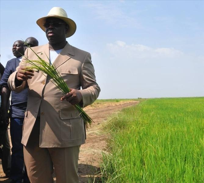 Le Chef de l'Etat campe sur son «autosuffisance en riz» en 2017