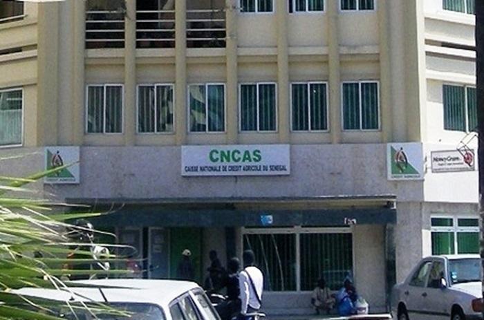 CNCAS : Les dessous d'un pillage organisé.
