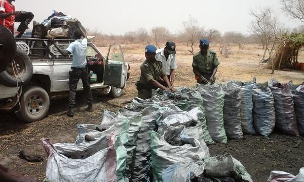 Matam : Boul faalé, produits pharmaceutiques, 4,750 tonnes de charbon,  saisi par la gendarmerie