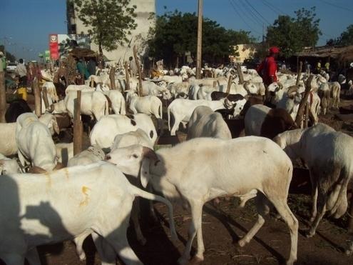 Tabaski 2015 : Les besoins estimés à 742.000 moutons