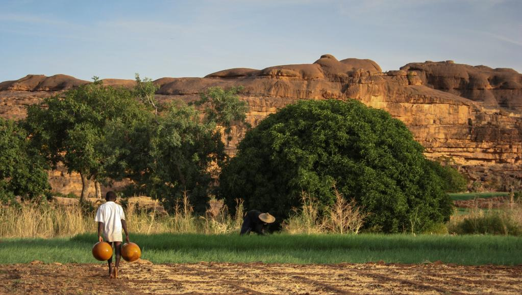 Champs de culture au Mali. Getty Images/Santiago Urquijo