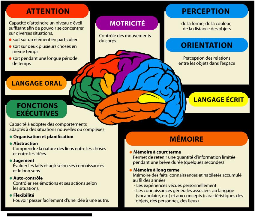 Cerveau : comment se forment nos souvenirs?