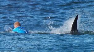 Un surfeur échappe à un requin