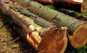 Macky déchire les permis de coupe du bois: «Je suis fermement décidé à mettre fin à ce fléau»