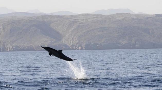 Le Hamas affirme avoir capturé un dauphin espion dressé par les Israéliens