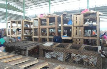 A Abidjan, des fermiers craignent d'énormes pertes après la découverte de foyers de grippe aviaire (MAGAZINE)