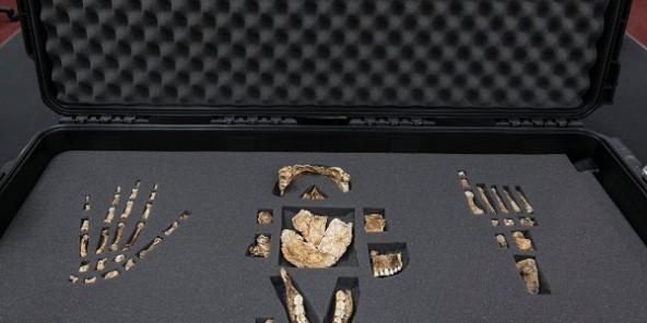 Voici l'Homo naledi, la nouvelle espèce du genre humain découverte en Afrique du Sud