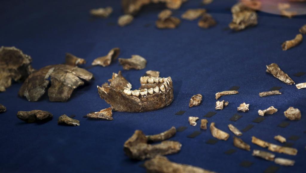 Homo naledi: une espèce proche de l'Homme qui enterrait ses morts