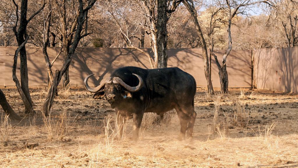 L'Afrique du Sud face à une sécheresse qui n'en finit plus