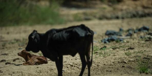 Climat : la Banque mondiale annonce un plan d'aide pour l'Afrique de 16 milliards de dollars
