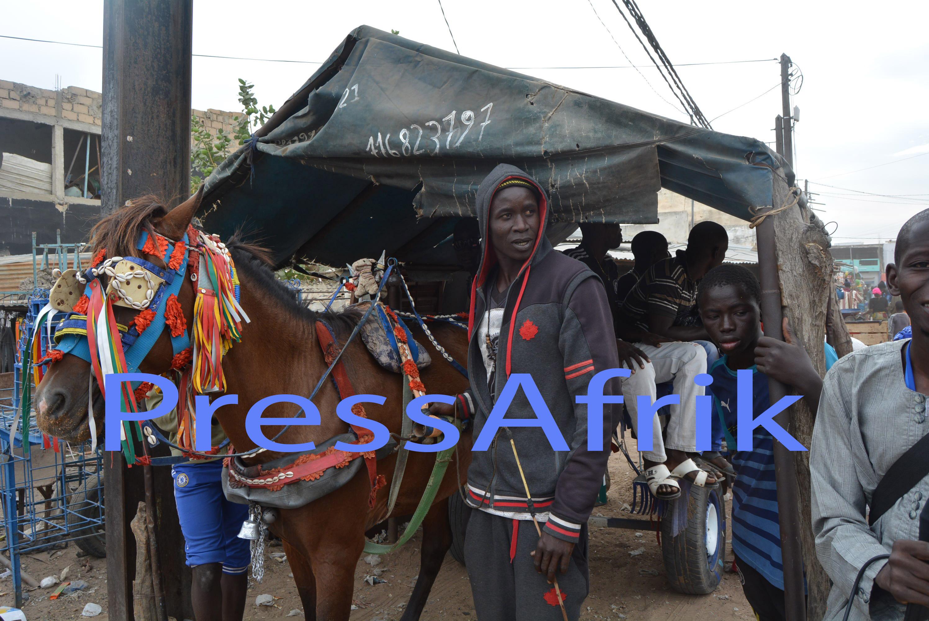 Magal 2015 : Les charretiers se frottent les mains