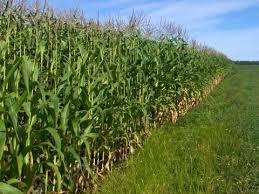 L'Agriculture, Levier Performant du Plan Sénégal Emergent