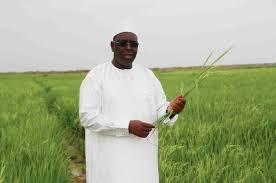 Fouta : Sinthiou-Mogo s'engage pour l'atteinte de l'autosuffisance en riz pour 2017