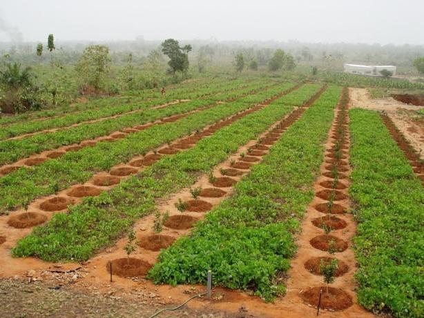 Sénégal : L'agriculture a réalisé un taux de croissance de 10,5% en 2015