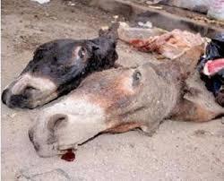 De la viande d'âne sur le marché: une source du service départementale de l'élevage parle