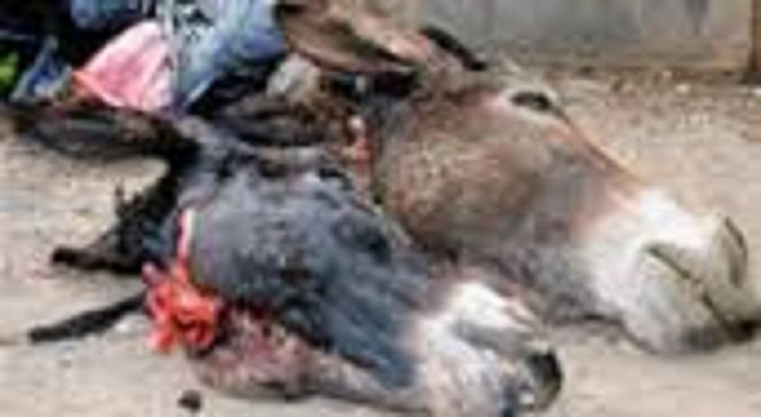 Abattage d'ânes sur le site du technopole : Un individu arrêté, 4 sont en fuite
