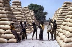 300 000 tonnes de graines d'arachide exportées : les producteurs ne craignent pas de rupture