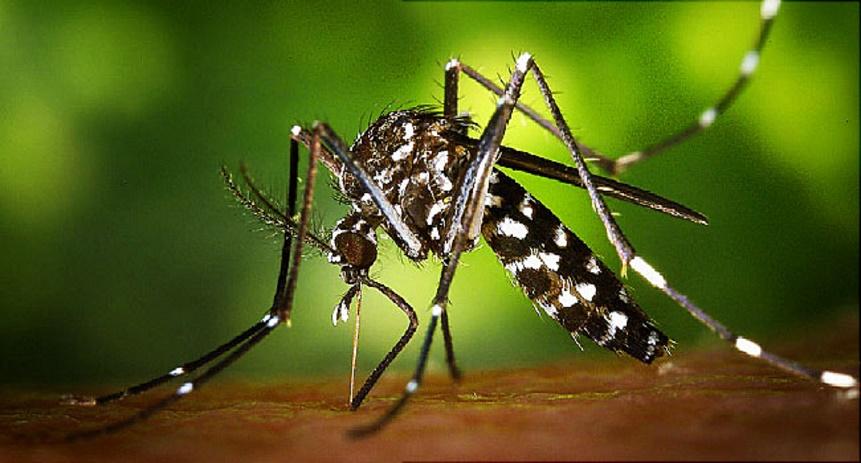 Détectée au Cap Vert, Zika à nos portes