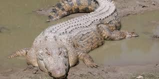 Un garçon de 2 ans emporté par un alligator à Disney World
