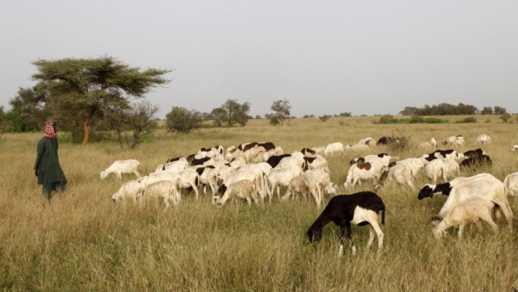 Nigeria: regain de violence entre bergers peuls et fermiers dans l'Etat de Benue