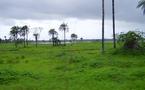Israël investit en Casamance dans l'agro-industrie, le solaire et la chimie.