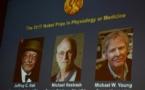 Les Américains Jeffrey C. Hall, Michael Rosbash et Michael W. Young reçoivent le prix Nobel de médecine