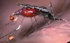 Paludisme : 3 millions de cas de plus en 2016 – L'exception sénégalaise
