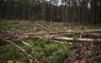 RDC: 50 ONG appellent au maintien du moratoire sur l'exploitation forestière