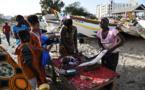 Marché Soumbédioune: Au cœur du métier de «nettoyeur de poissons»
