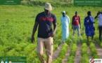 Vacances agricoles patriotiques : « Notre objectif est de pouvoir faire 2500 voire 4000 ha l'année prochaine » (Ousmane Sonko)