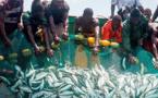 Tiraillements et opacité dans le secteur de la pêche: Birahim Seck demande à Macky de concrétiser l'adhésion du Sénégal au FITI