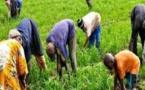 Projet Agri-preneur: 1,3 milliard de Fcfa mobilisé pour 2021