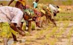 Agriculture à Podor: Mbolo Birane réclame l'aménagement des terres par la SAED