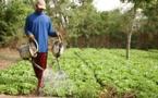 Réforme foncière, vers un bras de fer entre cultivateurs, producteurs maraîchers et l'Etat