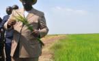 A la poursuite de l'autosuffisance en riz. (Par Abdoul Aly Kane)