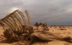 Somalie : entre sécheresse et inondation