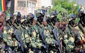 Ziguinchor: L'Armée brûle un grand champ de chanvre indien cultivé par une bande armée