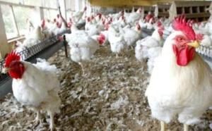 Grippe aviaire: le Mali ferme ses frontières aux produits avicoles sénégalais